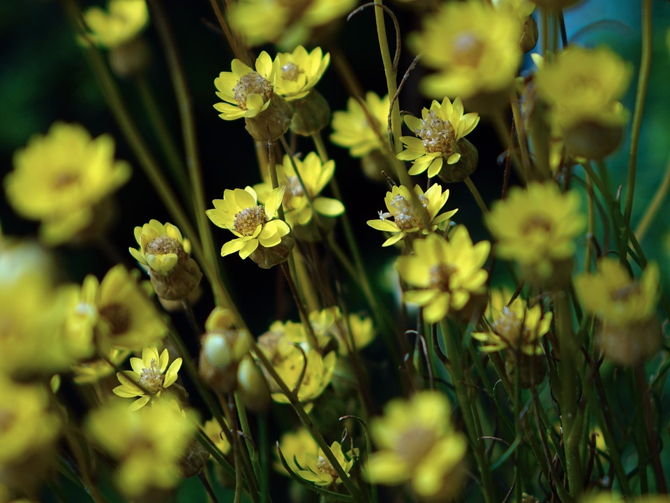 Close-up, Floral, Plants, Natural, Blossom, Bloom