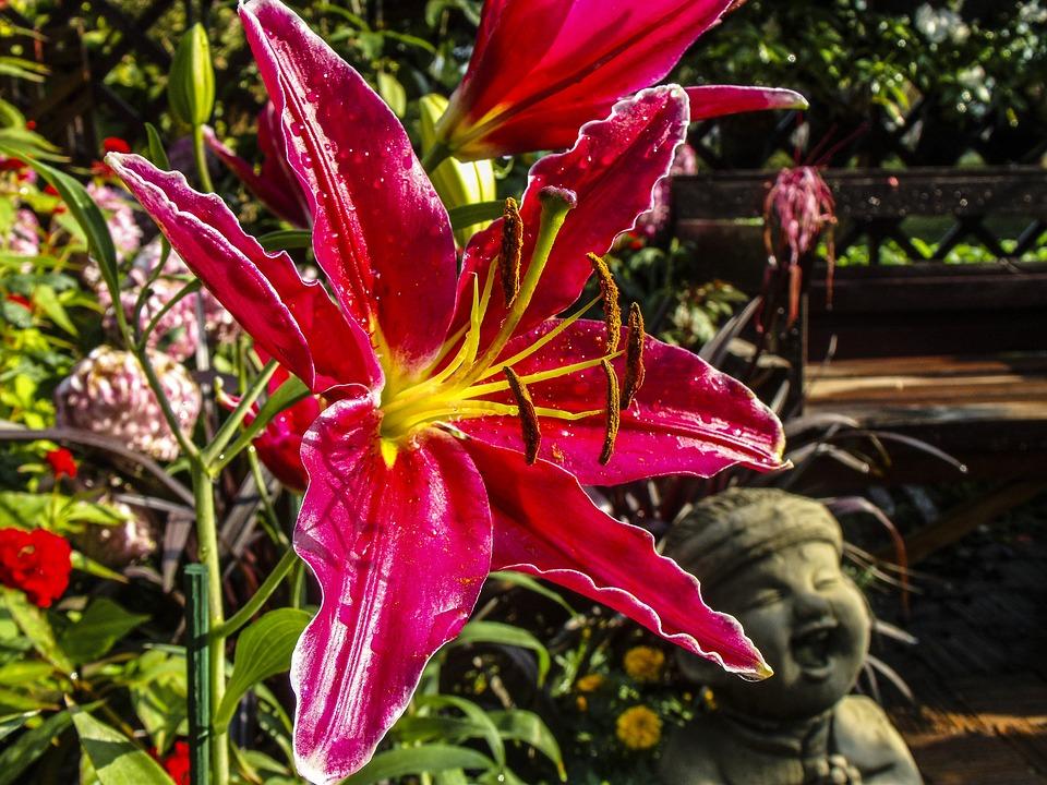 Feuerlilie, Flower, Blossom, Bloom, Red