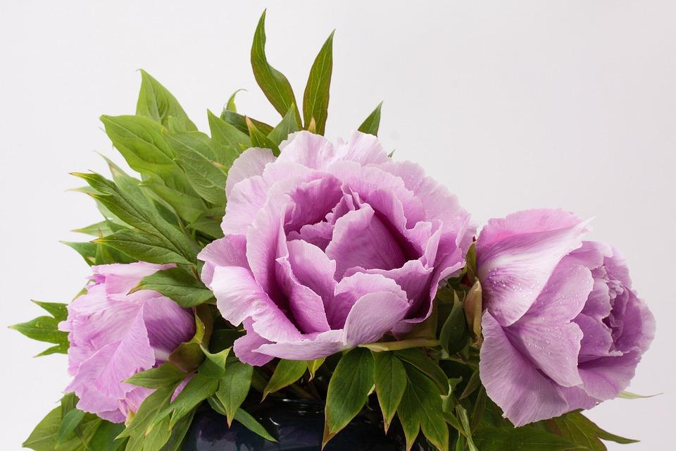 Bouquet, Peony, Flower, Nature, Flora, Spring, Blossom