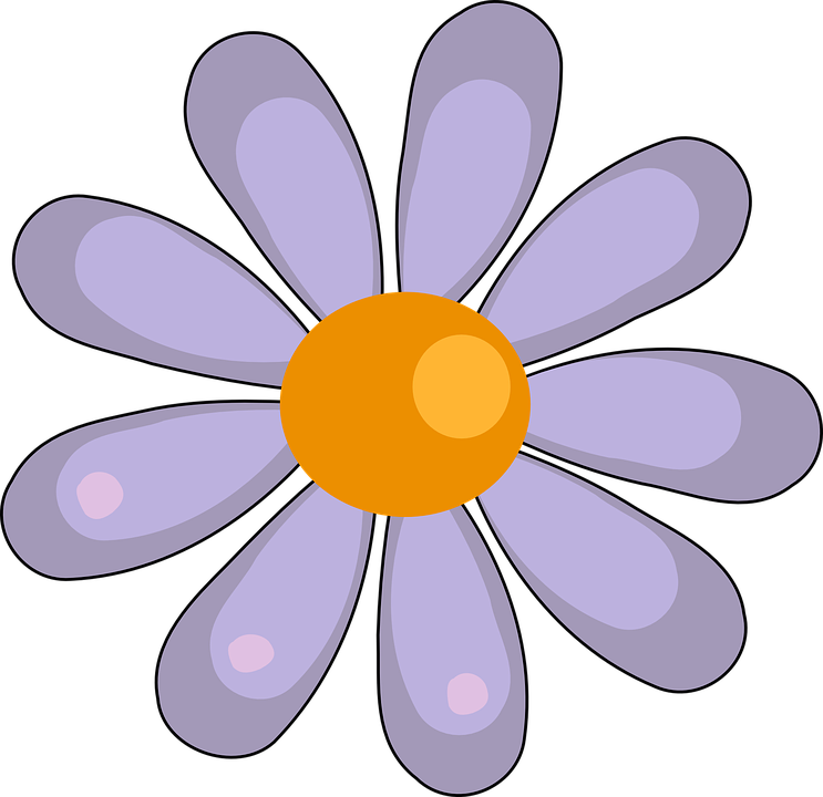Daisy, Flower, White, Floral, Blooming, Blossom, Spring