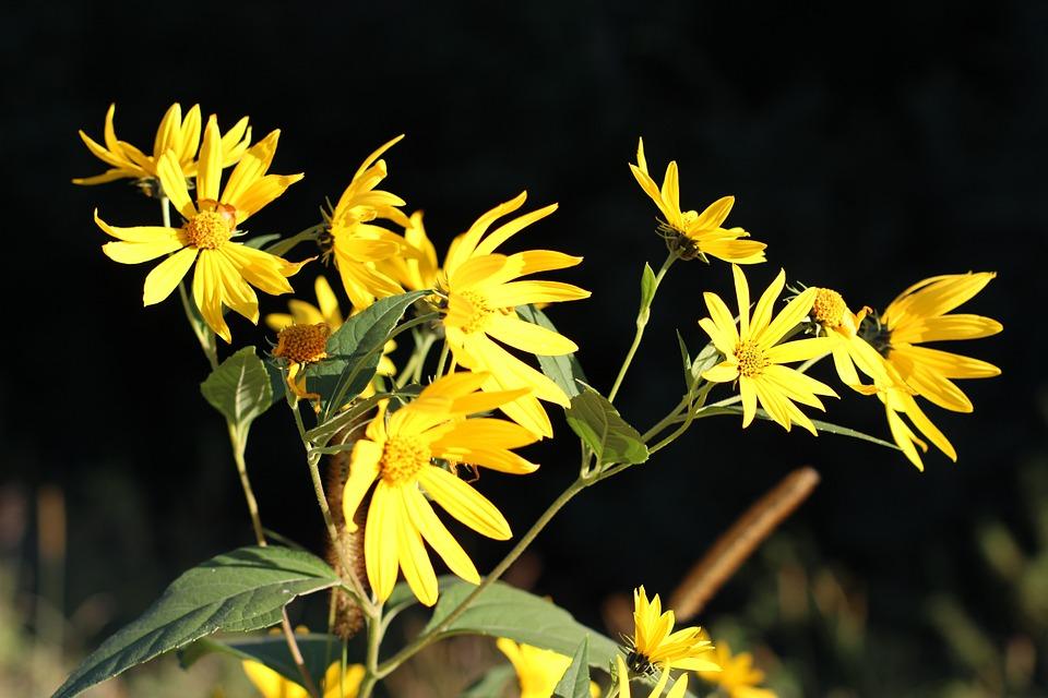 Flowers, Floral, Plants, Natural, Blossom, Bloom