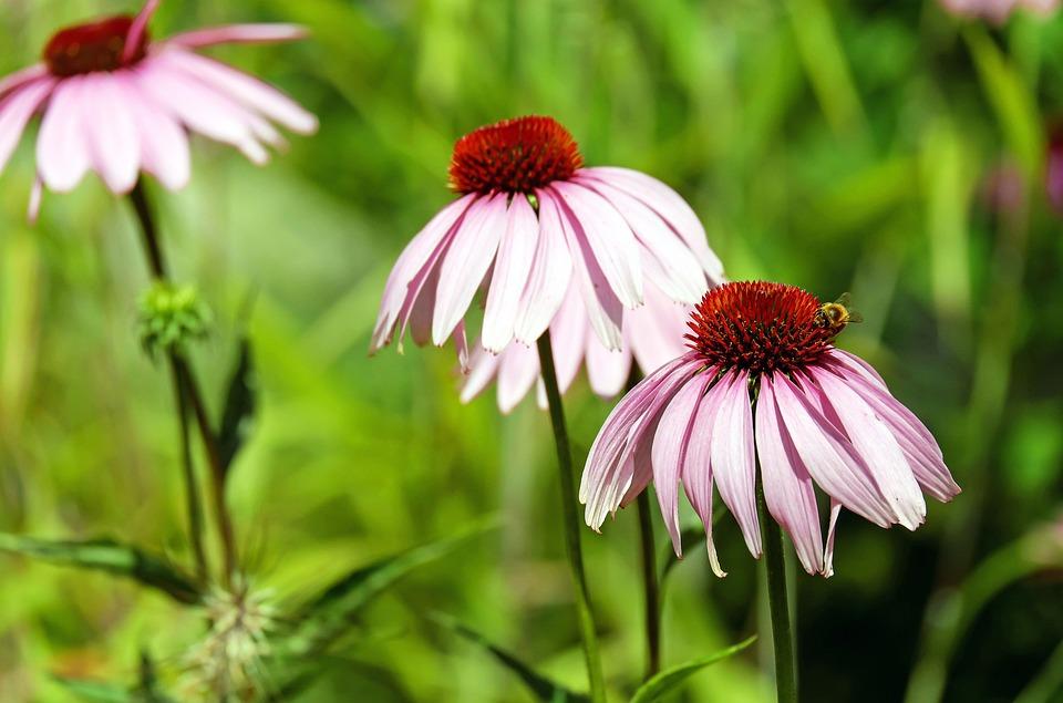 Sun Hat, Flower, Blossom, Bloom, Flower Basket, Purple