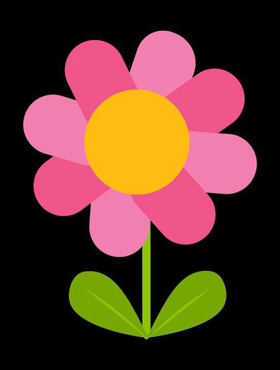 Flower, Blossom, Bloom, Blooming, Plant, Daisy, Garden