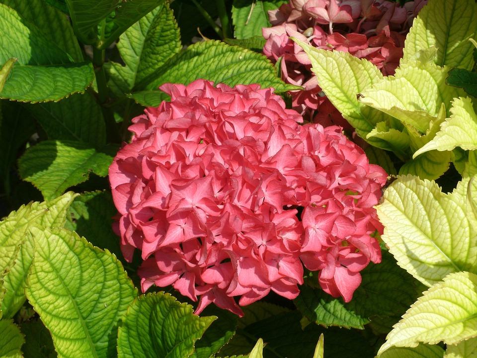 Blossom, Bloom, Flower Garden, Flowers, Nature, Violet