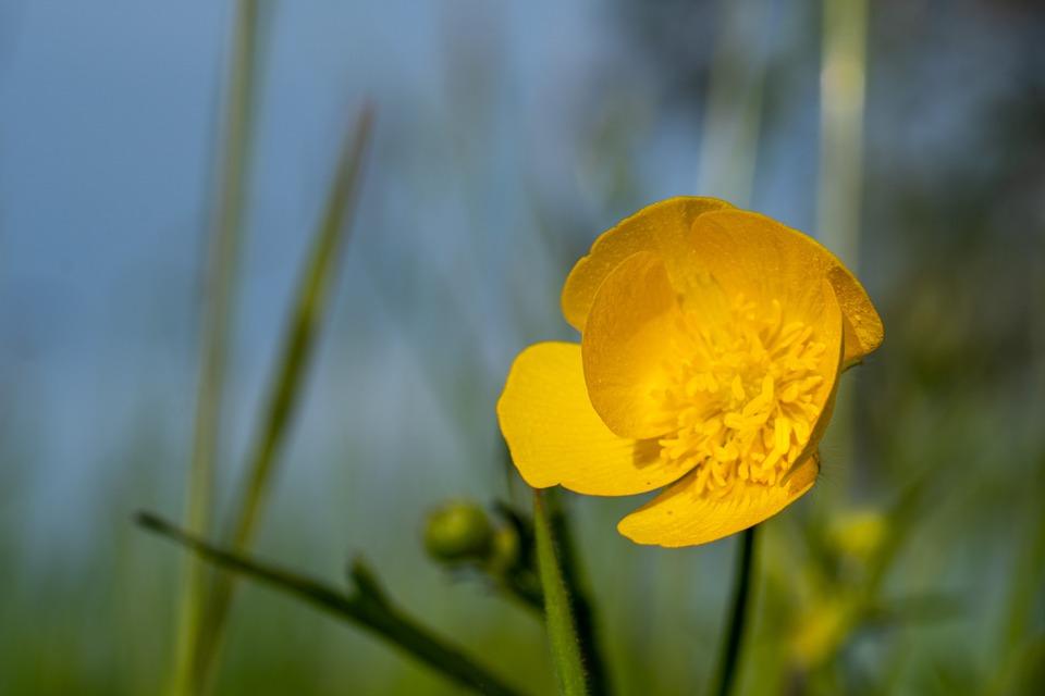 Flower, Macro, Nature, Spring, Blossom, Bloom, Plant