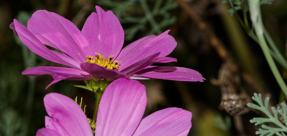 Flower, Blossom, Bloom, Pink, Yellow, Nature, Plant