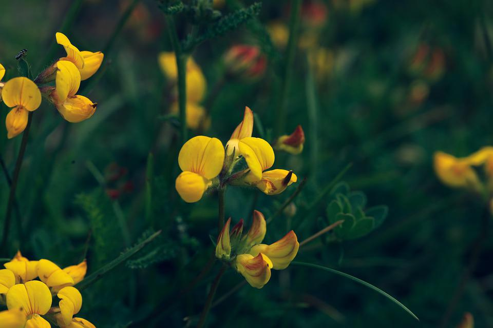 Flower, Nature, Bloom, Summer, Blossom, Yellow