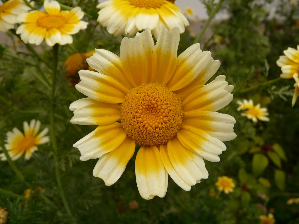 Flower, Blossom, Bloom, Nature, Yellow, Plant, Flora
