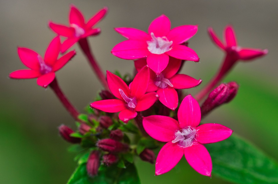 Pink Flowers, Flowers, Bloom, Blossom, Pink Petals