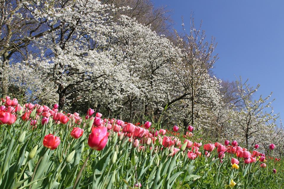 Flowers, Spring, Blossom, Bloom, Nature, Plant, Season
