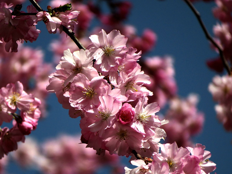 Spring, Branch, Flowers, Bloom, Pink, Blossom, Colorful