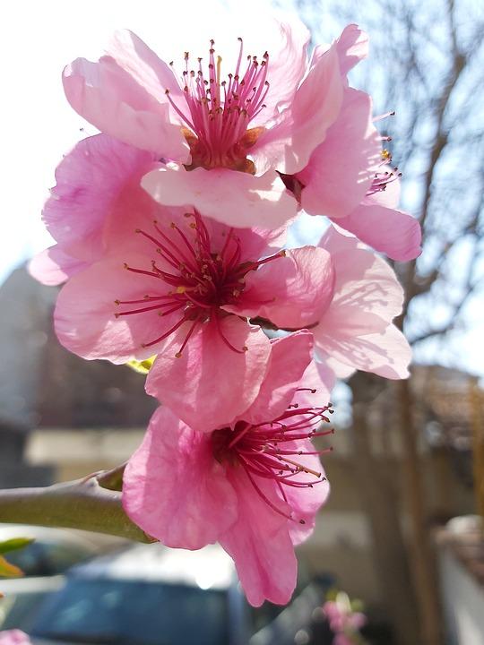 Spring, Flowers, Nature, Garden, Blossom, Branch, Tree
