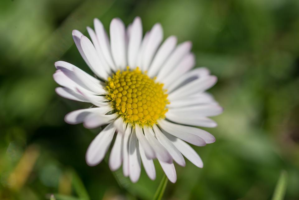 Free Photo Blossom Garden Daisy Flora Yellow Spring Bloom Max Pixel