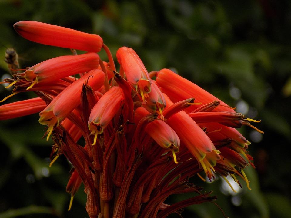 Plant, Bloom, Nature, Blossom, Garden, Flora, Petals