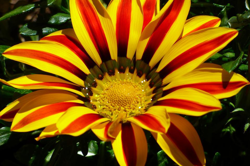 Flower, Colorful Flower, Garden, Spring, Blossom, Bloom