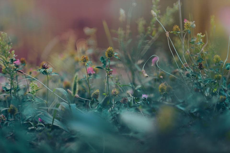 Garden, Plants, Bloom, Flowers, Blossom, Gardening
