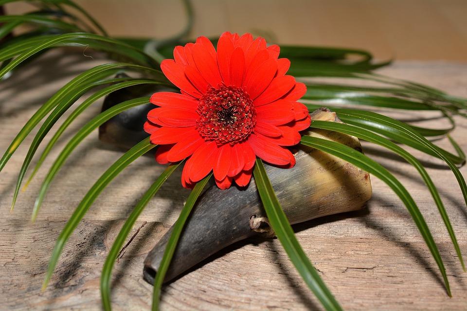Gerbera, Flower, Plant, Blossom, Bloom, Red, Grass