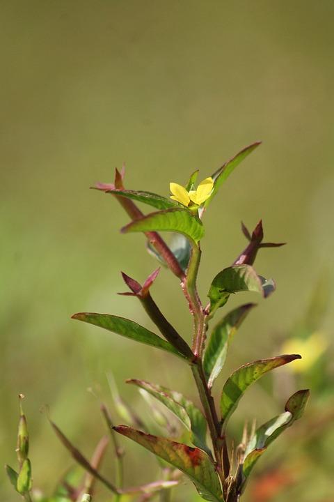 Kerala, India, Flower, Wild, Nature, Blossom, Colorful