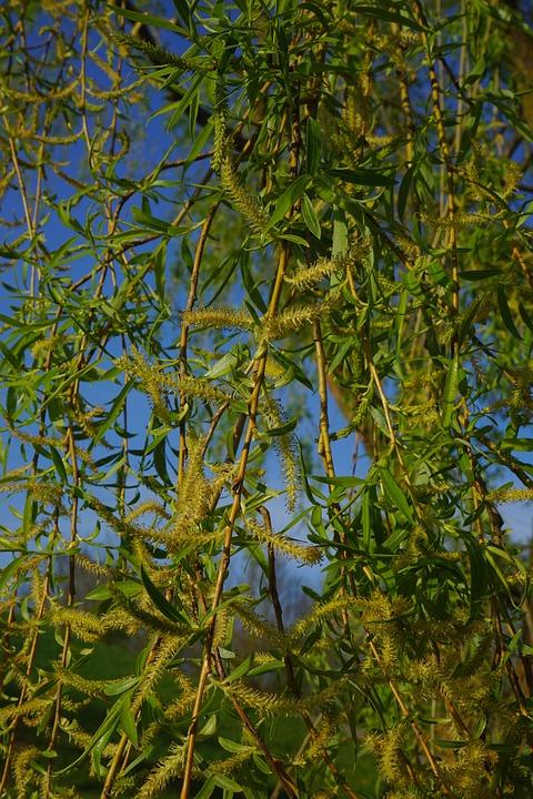 Pasture, Tree, Aesthetic, Blossom Kitten