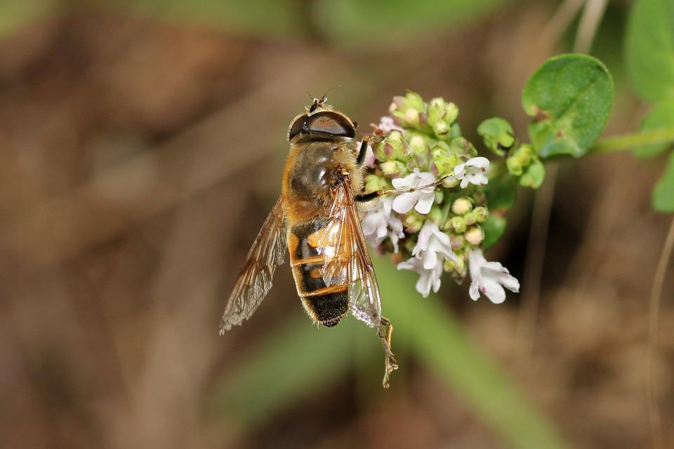 Bee, Flower, Pollination, Blossom, Bloom, Macro, Nature