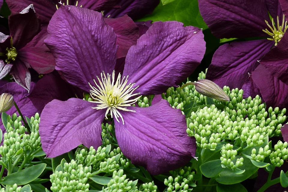Flower, Purple, Petals, Macro, Floral, Flora, Blossom