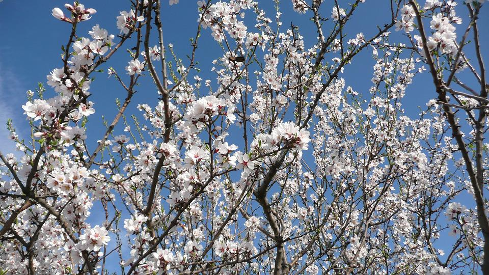 Spring, Floral, Plants, Natural, Blossom, Bloom, Petals