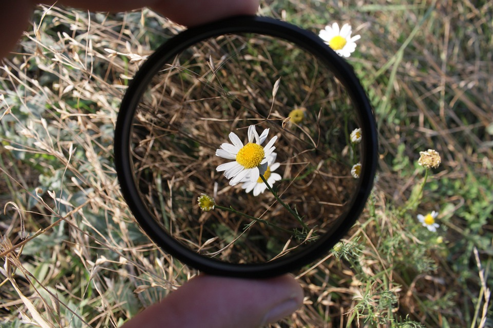 Polarizing, Floral, Plant, Natural, Blossom, Bloom