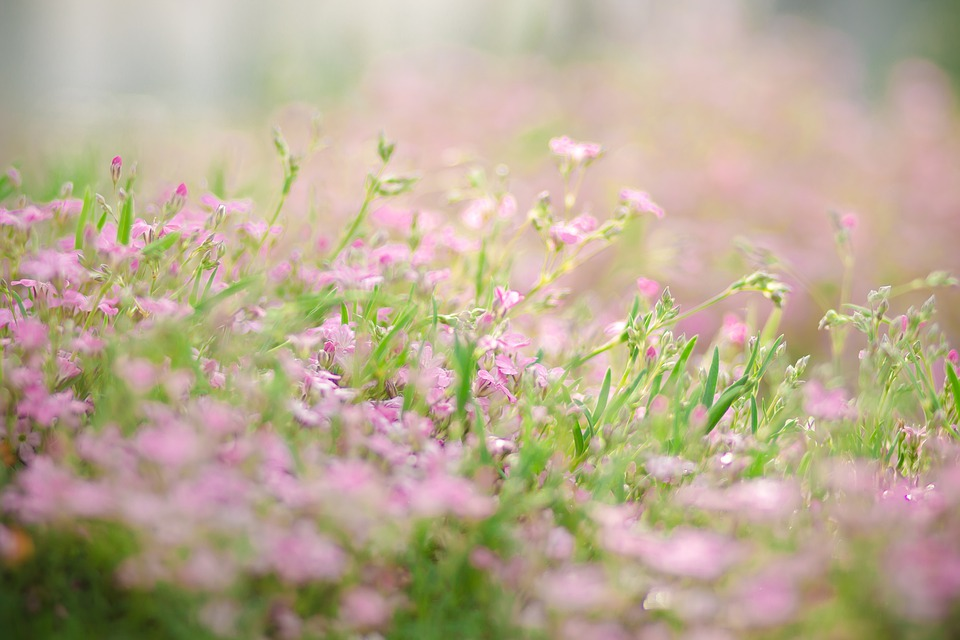 Moss, Flower Bed, Nature, Blossom, Bloom
