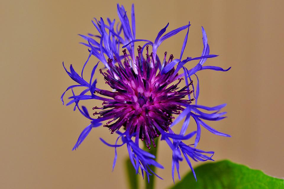 Pointed Flower, Garden, Nature, Blossom, Bloom