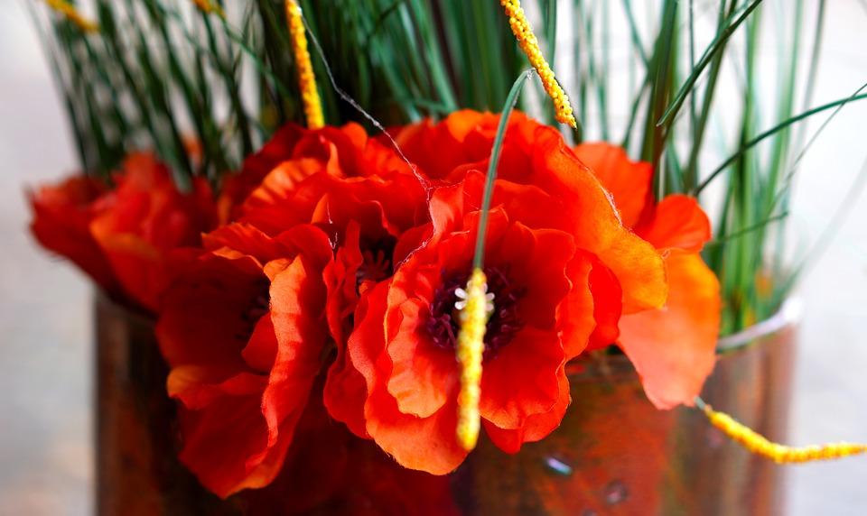 Flower, Red, Blossom, Bloom, Nature, Flora