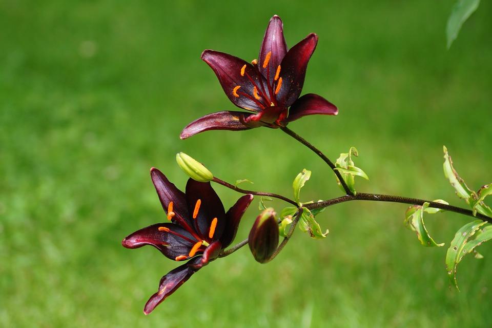 Plant, Flower, Blossom, Bloom, Flowering Twig, Nature