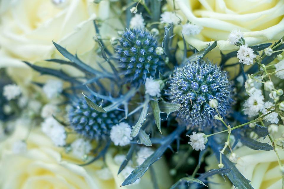 Thistle, Blue, Flower, Nature, Plant, Blossom, Bloom