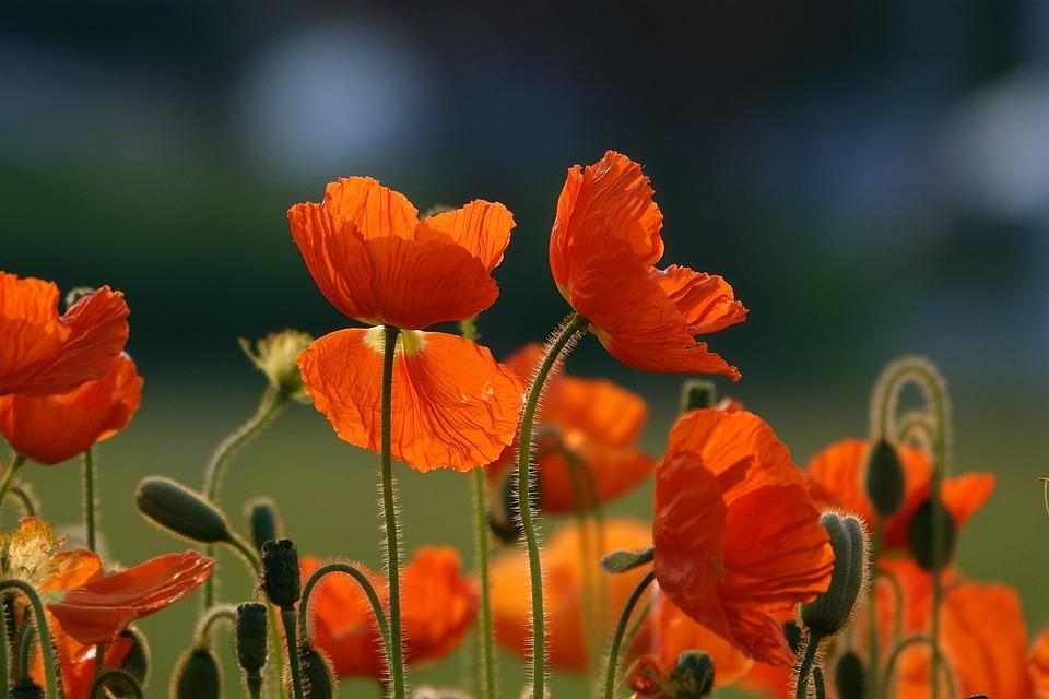 Orange Flowers, Flowers, Bloom, Blossom, Orange Petals