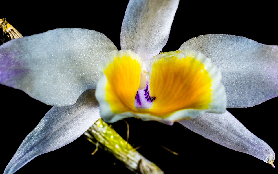 Orchid, Wild Orchid, Blossom, Bloom, Flower