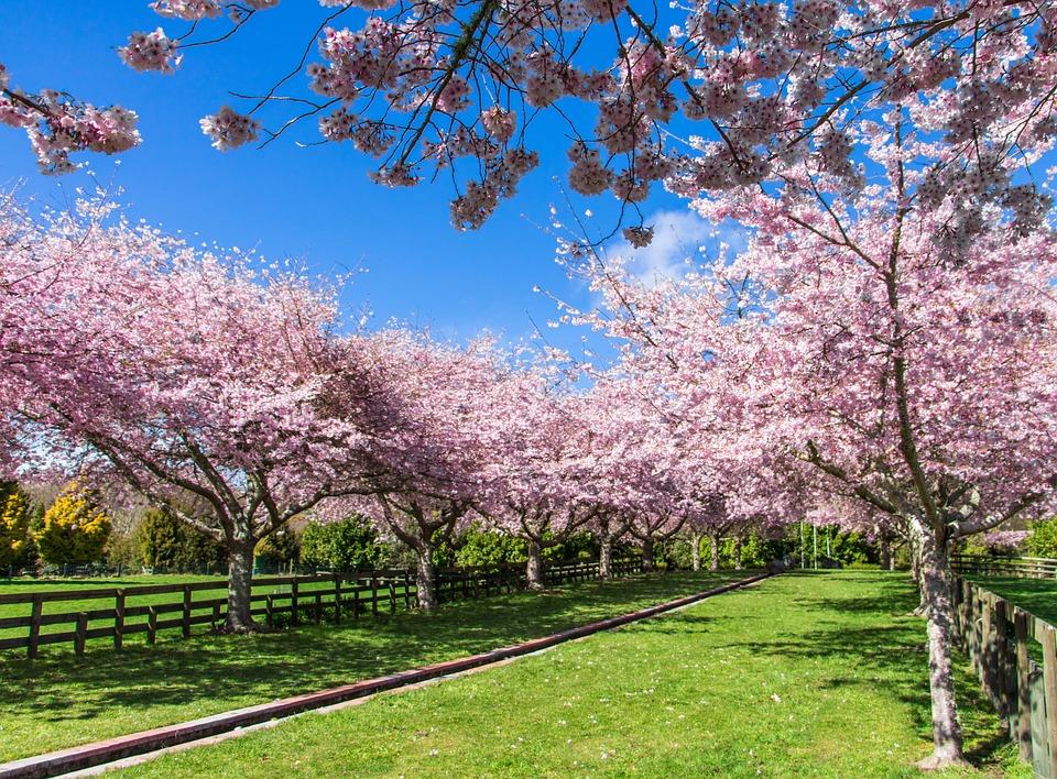 Spring, Blossom, Peace Garden, Centennial, Park