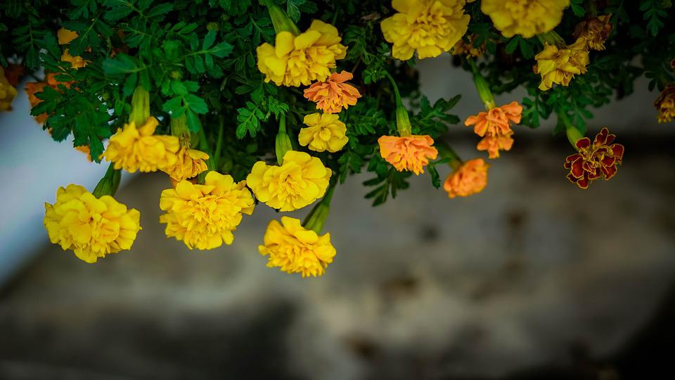 Flowers, Upside Down, Petals, Blossom, Bloom, Flora
