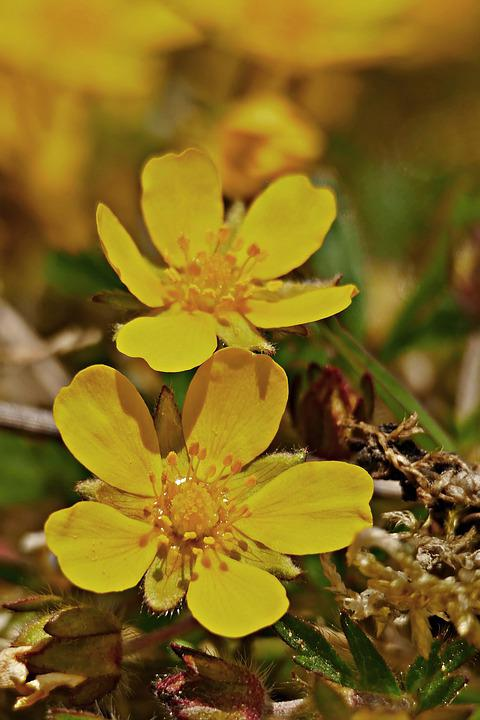 Yellow Flowers, Petals, Yellow Petals, Flowers, Blossom
