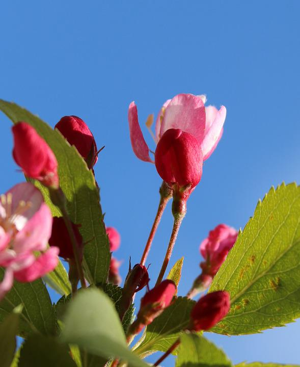 Blossom, Pink, White, Spring, Cherry, Cherry Blossom