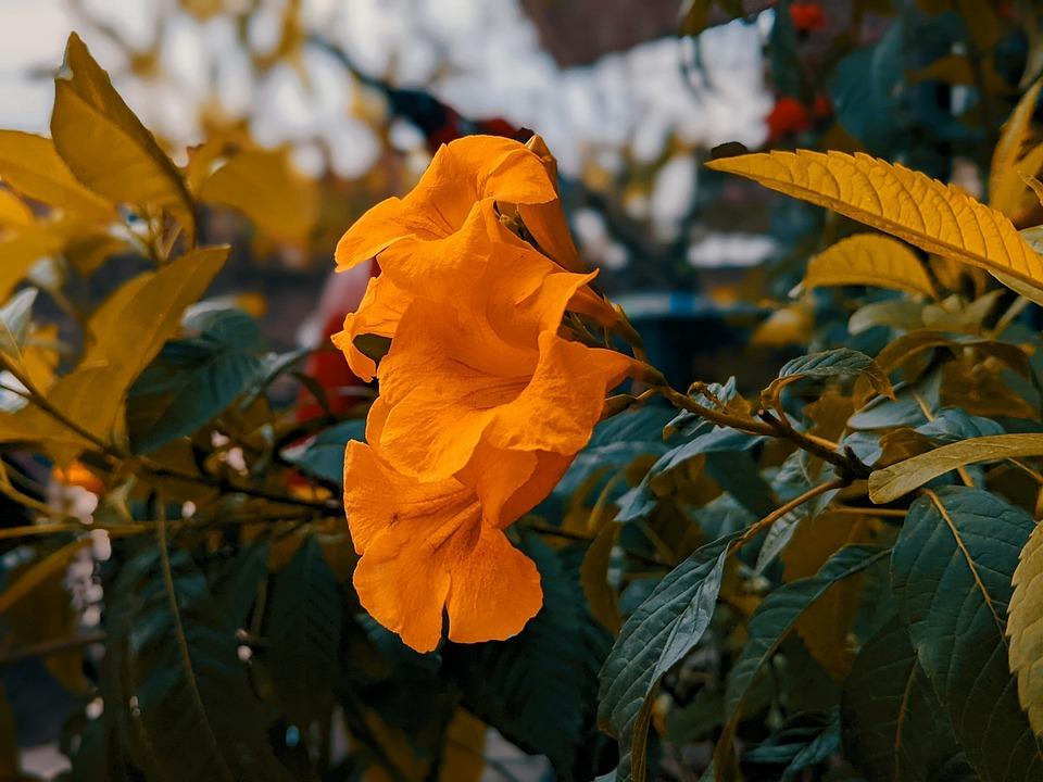 Flowers, Nature, Botany, Blossom, Plant, Petals, Bloom