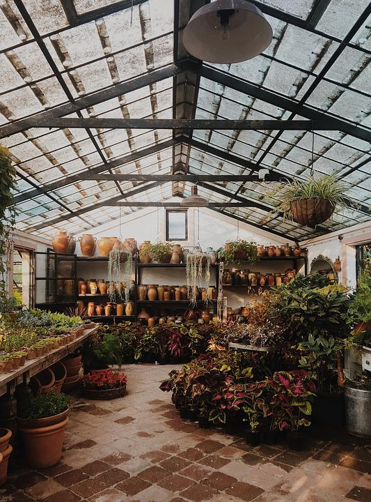 Greenhouse, Flowers, Blossom, Bloom, Nature, Plant