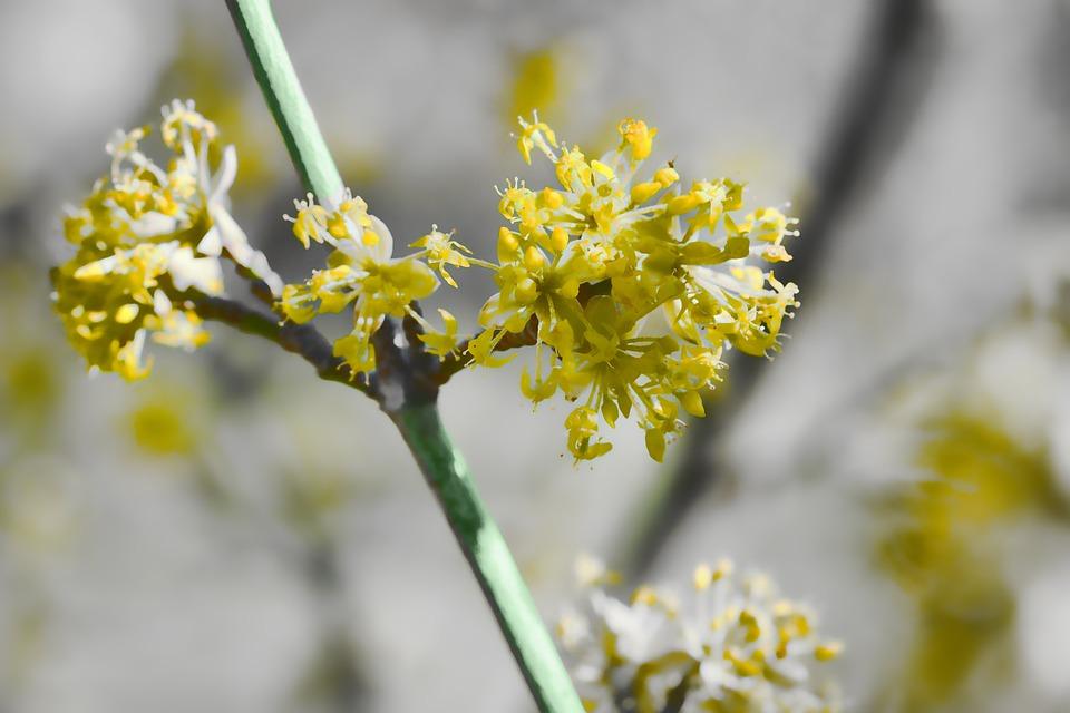 Blossom, Nature, Plant, Flowers