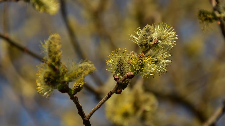 Blossom, Bloom, Tree, Spring, Nature, Bloom, Bud, Plant
