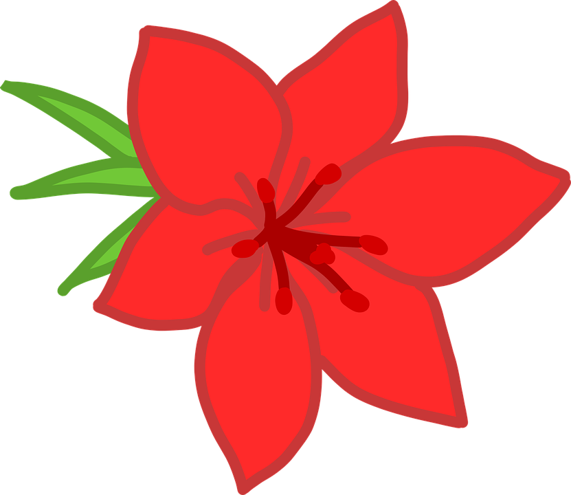 Flower, Red, Simple, Blossom, Bloom
