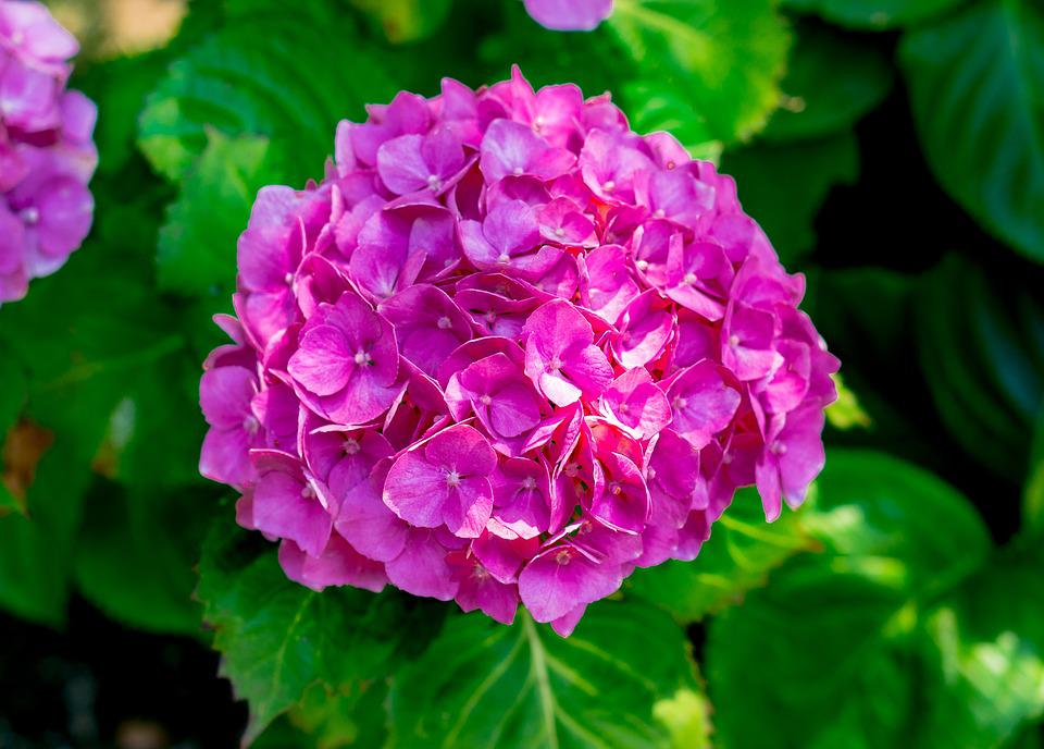 Flower, Bloom, Rich, Blossom, Botanical, Botany, Garden
