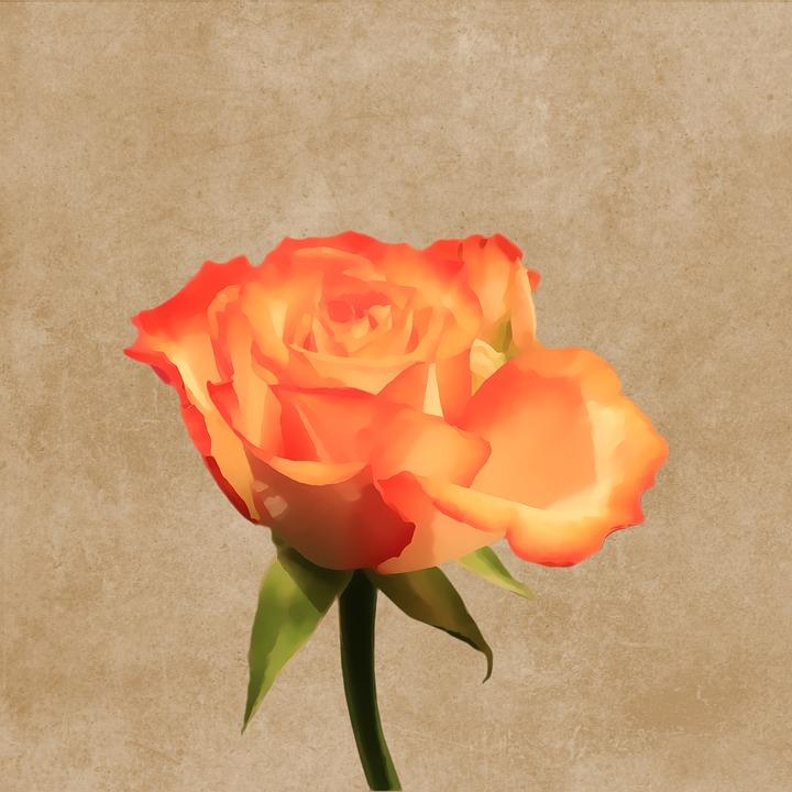 Flower, Blossom, Bloom, Rose, Orange, Drawing