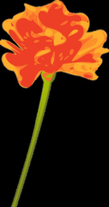 Flower, Orange, Single, Stem, Blossom, Flora