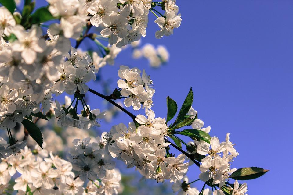 Blossom, Blue, Sky