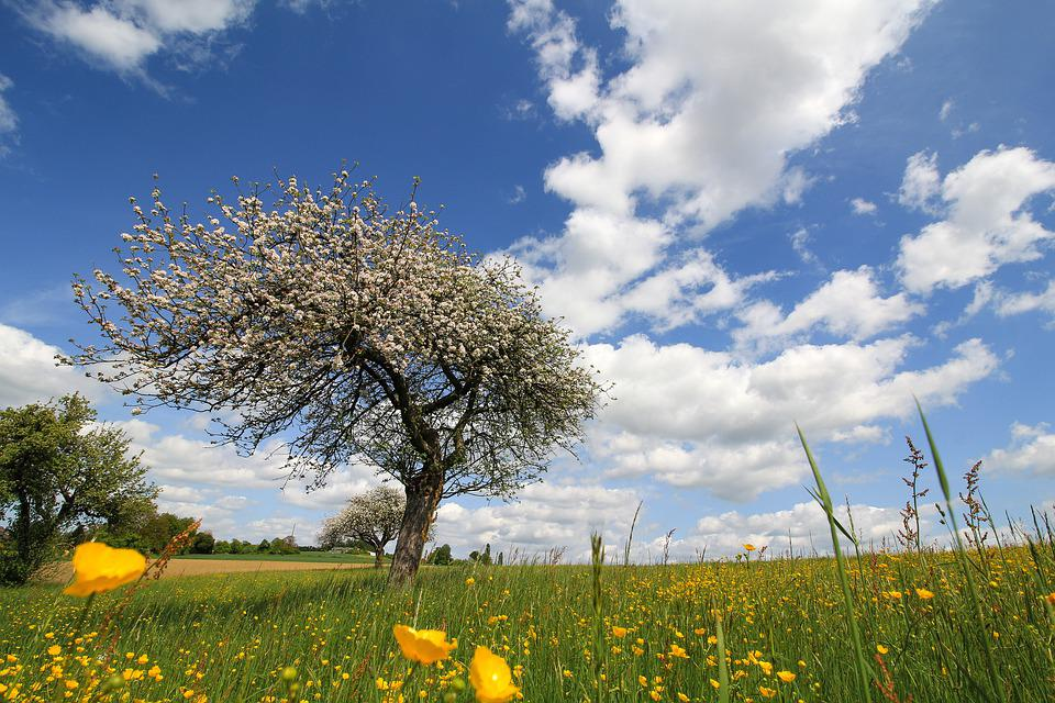 Landscape, Nature, Sky, Meadow, Tree, Blossom, Spring