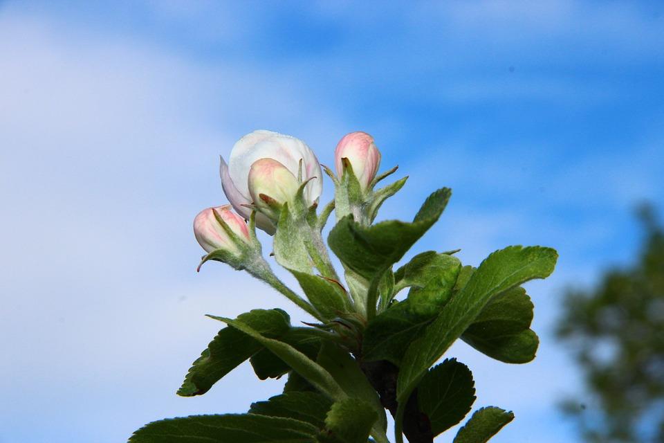 Spring, Blossom, Bloom, Sky