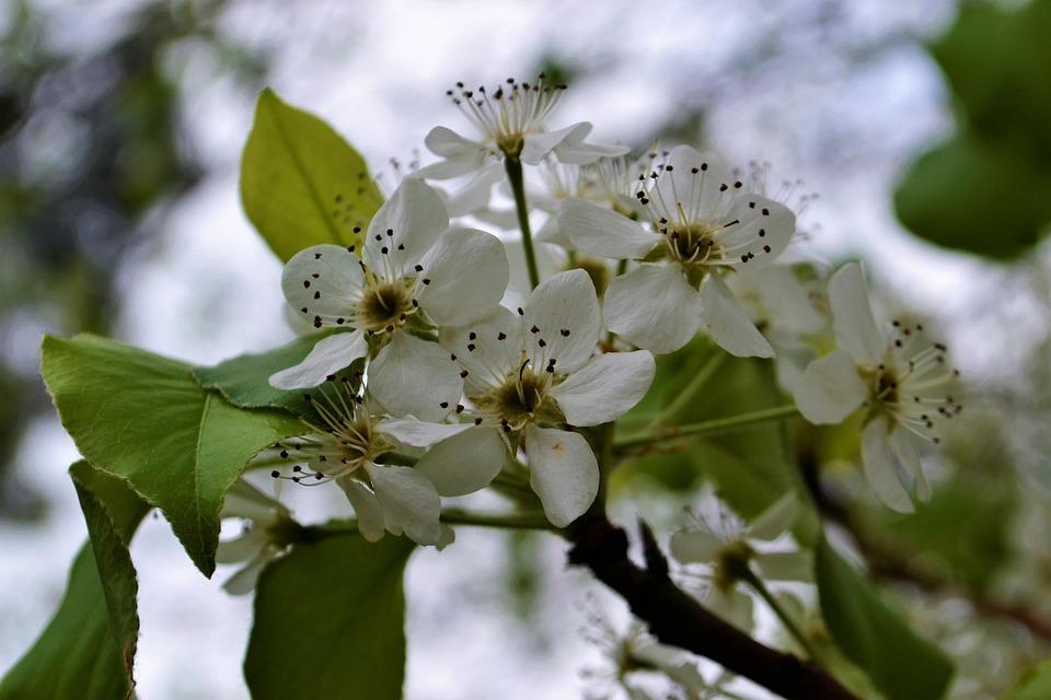 Tree, Flower, White, Spring, Blossom, Season, Blooming